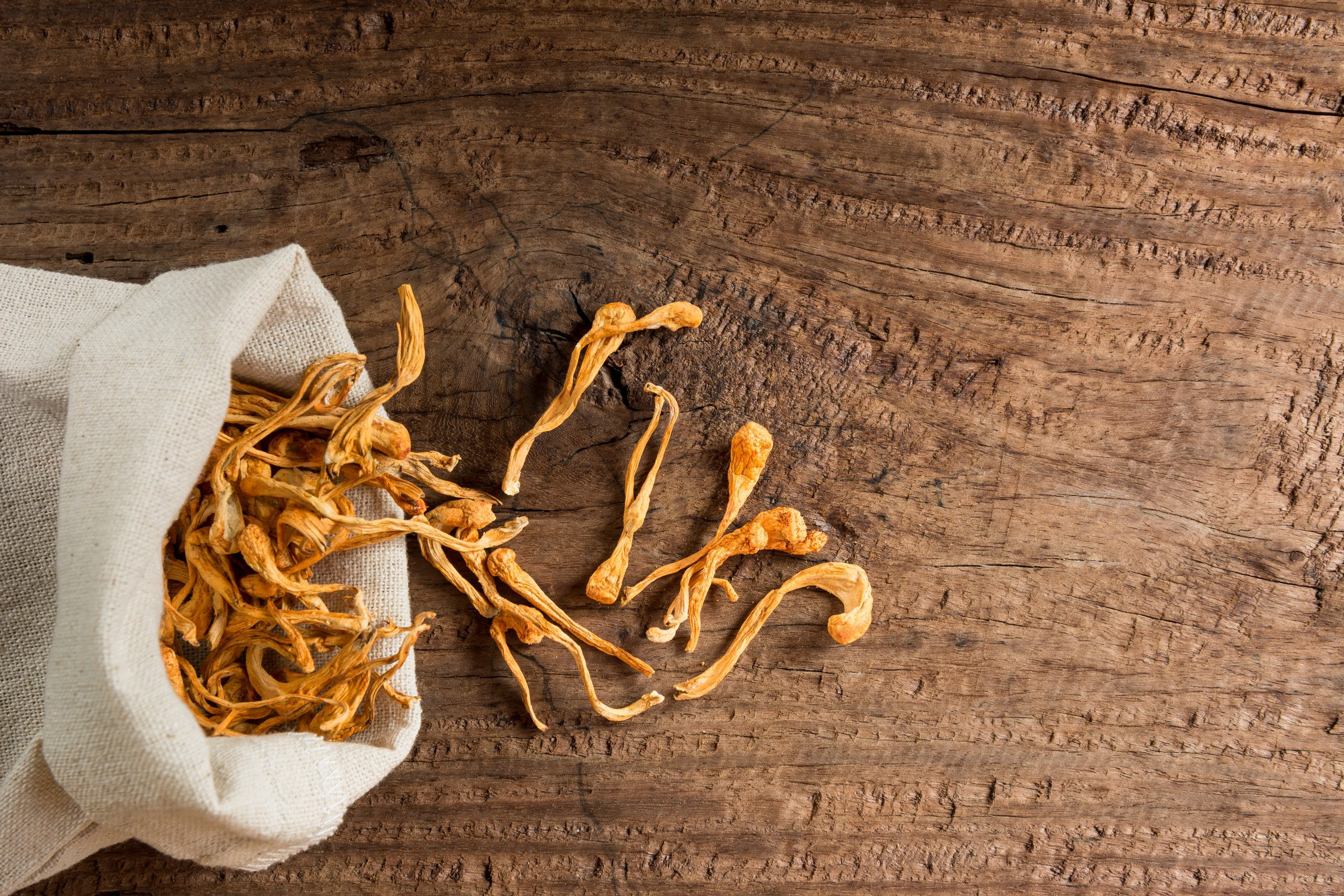top view of dried cordyceps militaris (adaptogen) mushroom with cloth bag on old and crack wooden table.