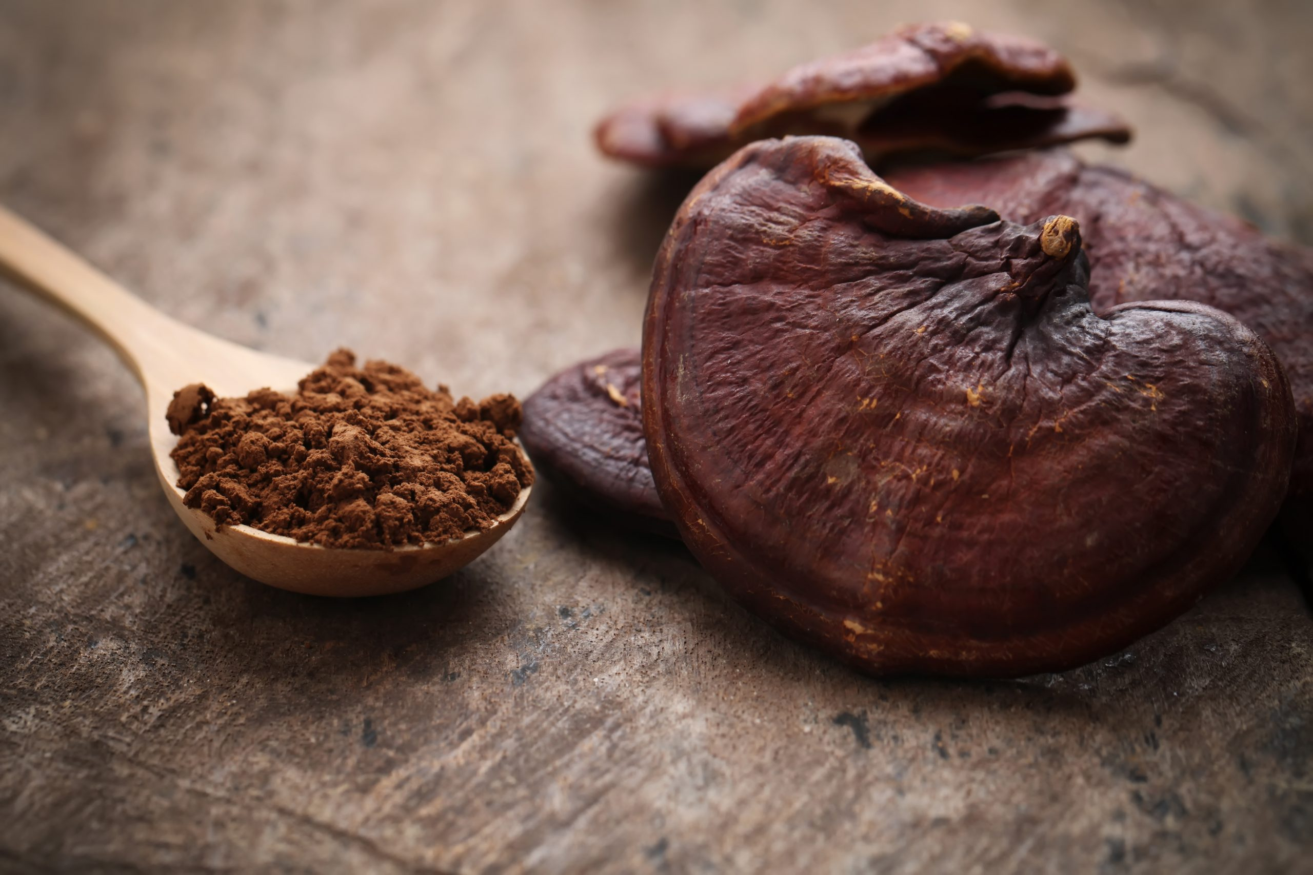 Ganoderma Lucidum Mushroom on wooden background